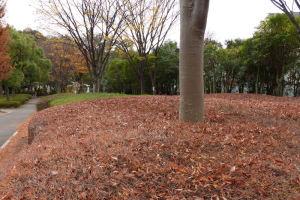 葉が落ちてきれいでした