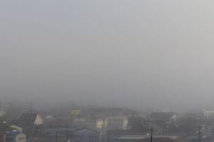 今朝は霧が出ていました