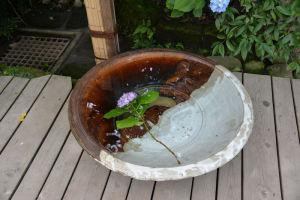 大きな鉢に水が入りあじさいが1本