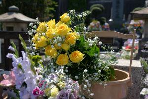 きれいな花ばかり