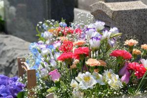 色とりどりの花が