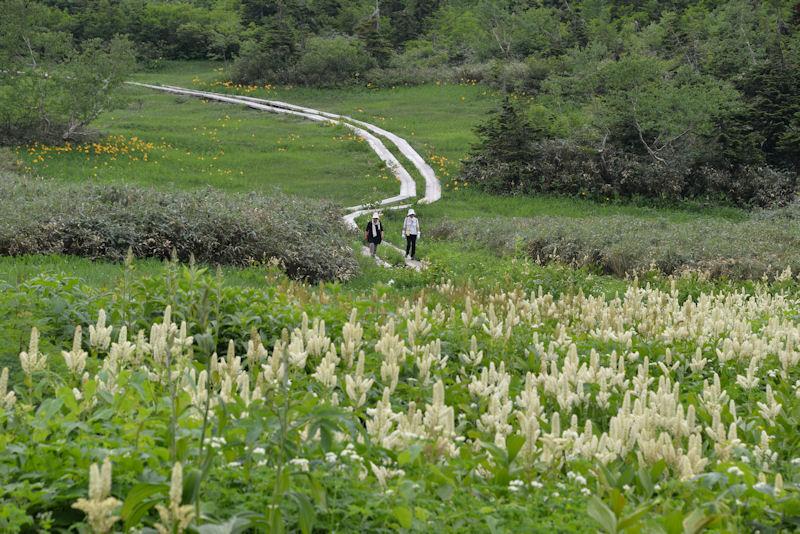 ワタスゲ湿原