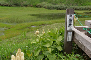 浮島湿原の休憩場