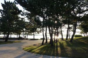 松林の間から朝日が