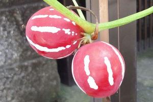 沖縄に自生する日本の植物