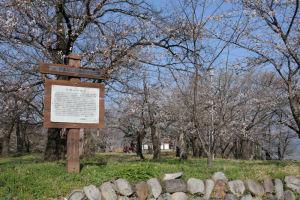 町の高台にある「正木神社」