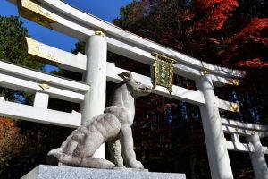 三峯神社の信仰はオオカミ