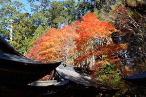 拝殿奥の紅葉は色鮮やか