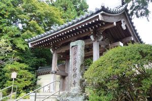 鎌倉浄妙寺植物観察