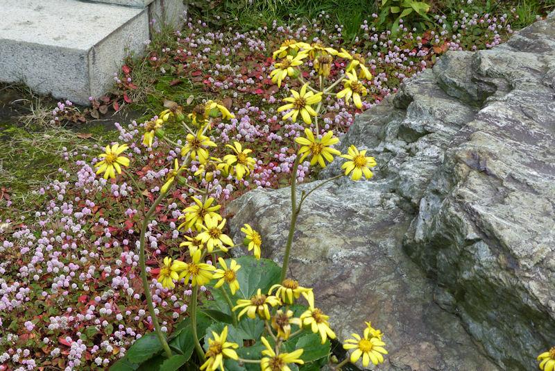黄色い花の説明もたくさんされましたが