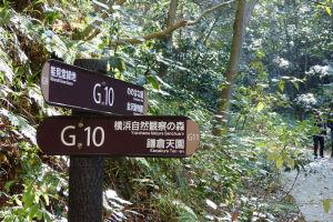 「自然観察の森」へ進みます