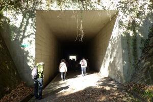 横横金沢支線下のトンネル