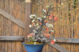立派な盆栽がたくさん