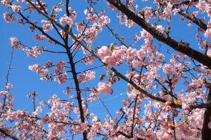 よく咲いていてとてもきれいです