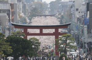 鶴岡八幡宮段葛工事竣功式は3月30日
