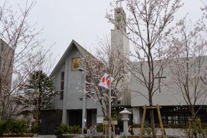 カトリック雪の下教会と段葛の桜