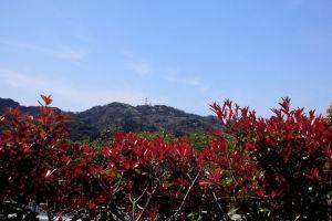 テニス、光の丘&国際村コート