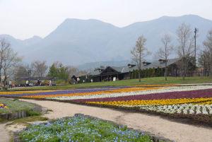 くじゅう花公園