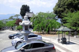樹齢200年の枝垂桜