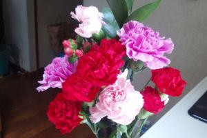 「母の日」のプレゼント