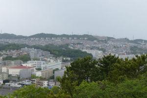 野島公園植物観察会 Part2