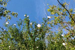駐車場の近くに咲いていた花