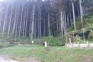 学校の裏手に行くと雑木林の裏山が