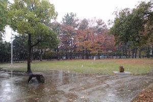 9時半過ぎの富岡八幡公園