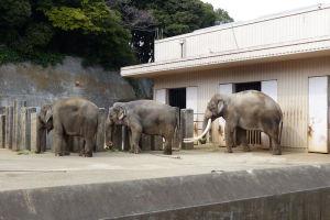 インド象が3頭