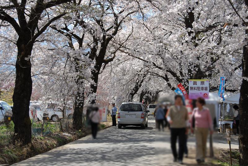桜並木のトンネル