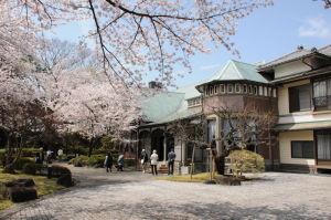 横須賀市田戸台分庁舎の桜