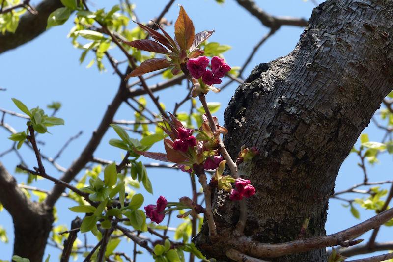 幹から出た小さな枝にも