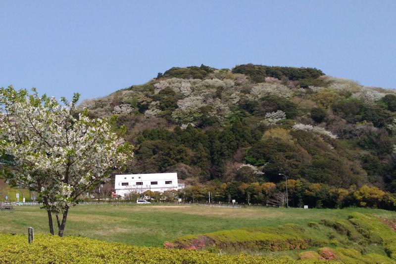 湘南国際村 春の風景