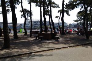 野島公園のバーベキュウ場も賑わっていました