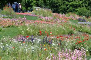 芝の緑と花々
