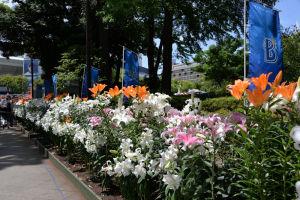 通路の両脇には大きなユリの花が