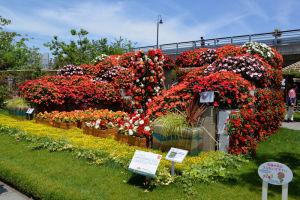 赤い花は「サンバチェンス」