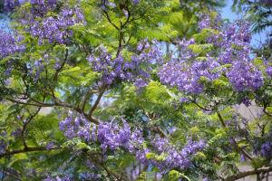 紫の花と緑の葉がきれいです