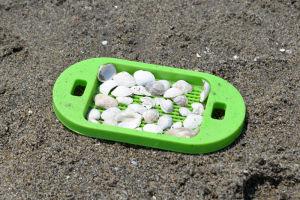 貝殻を集め