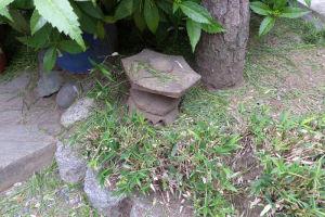 松の回りにはまだたくさん剪定の葉が