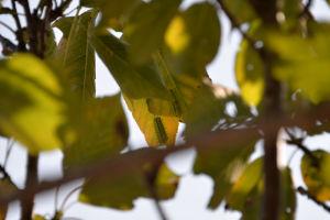 桜の木があり下から見上げると