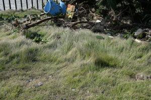 芝生は風の影響かねじれて変な形に