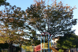 台風22号が過ぎて落ち葉がたくさん