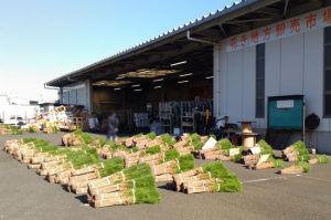 花き卸売市場ではお正月の松が
