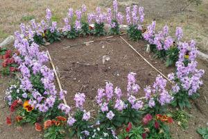 湘南国際村西公園の花たち