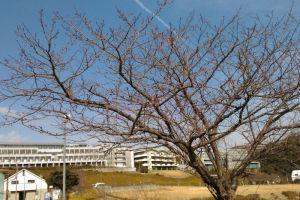 湘南国際村は春近し