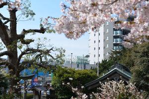 瀬戸神社から見えるシーサイドライン新駅舎