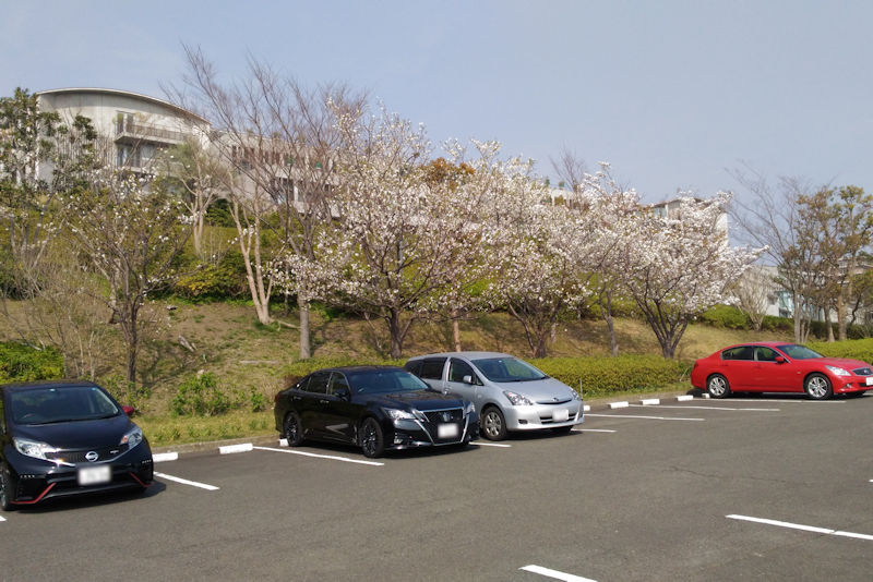 桜もまだ残っていました