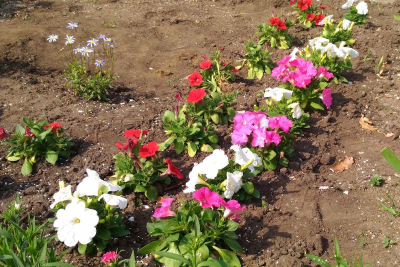 名前が分からない花がたくさん