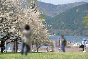 少し風が出てきて桜の花びらが舞い散る